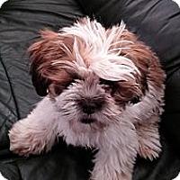Adopt A Pet :: Biscuit - Golden Valley, AZ