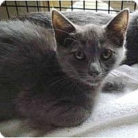 Adopt A Pet :: Estelle - Colmar, PA