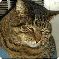Adopt A Pet :: Oscar - Washington Terrace, UT