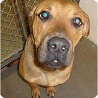 Adopt A Pet :: Hooch - Winter Haven, FL