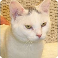 Adopt A Pet :: Dillon - Catasauqua, PA