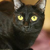 Adopt A Pet :: Zelda - Canoga Park, CA