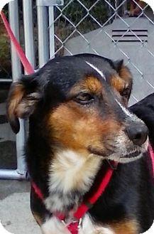 Labrador Retriever Mix Dog for adoption in Ellijay, Georgia - Lizzy