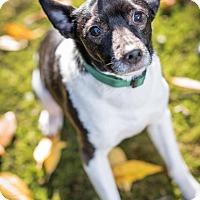 Adopt A Pet :: Leo - Pitt Meadows, BC