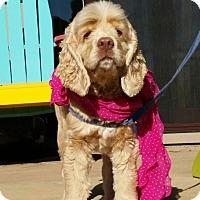 Adopt A Pet :: Daisy - Santa Barbara, CA