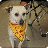 Adopt A Pet :: Jack - Bakersfield, CA