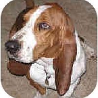 Adopt A Pet :: Tyson - Phoenix, AZ