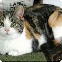 Adopt A Pet :: Franny - Portland, OR