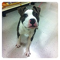 Adopt A Pet :: Happy - Louisville, KY