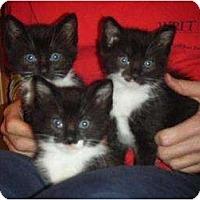 Adopt A Pet :: Tex, Rex and Boots - Kensington, MD