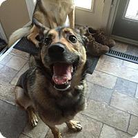 Adopt A Pet :: Xena - Saskatoon, SK