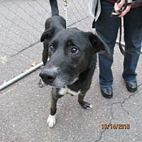 Adopt A Pet :: Mister - Wapwallopen, PA