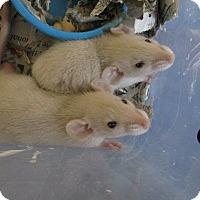 Adopt A Pet :: BEEB and JULES - Philadelphia, PA
