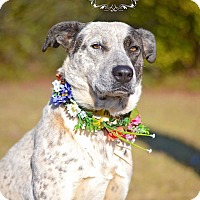 Adopt A Pet :: Avery - Fort Valley, GA