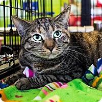 Adopt A Pet :: A..  Raelyn - Charlotte, NC