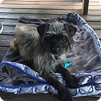 Adopt A Pet :: Greta - Windermere, FL