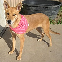 Carolina Dog/Shepherd (Unknown Type) Mix Dog for adoption in Pilot Point, Texas - LADY