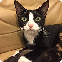 Adopt A Pet :: Emma - New  York City, NY
