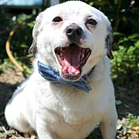 Adopt A Pet :: Domino - South El Monte, CA