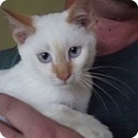 Adopt A Pet :: Casper - Arlington, VA