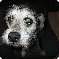 Adopt A Pet :: Renee - Apex, NC
