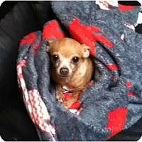 Adopt A Pet :: Sadie - Johnsburg, IL