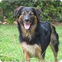 Adopt A Pet :: Cameo - Orlando, FL