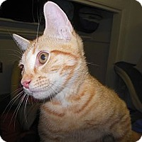 Adopt A Pet :: Tigger - Phoenix, AZ
