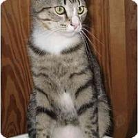 Adopt A Pet :: Herbie - Cincinnati, OH