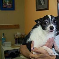 Adopt A Pet :: Pip - Glendale, AZ