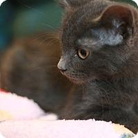 Adopt A Pet :: Yulia - Canoga Park, CA