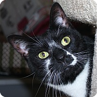 Adopt A Pet :: Luna - North Branford, CT