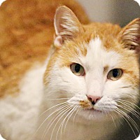 Adopt A Pet :: Tommy Lee - Lincoln, NE