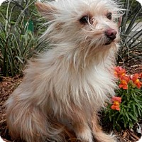 Adopt A Pet :: Harley - Tyler, TX