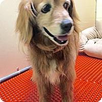 Adopt A Pet :: Sweet Pea - BIRMINGHAM, AL