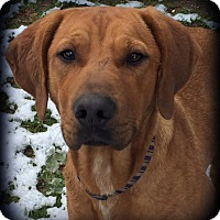 Adopt A Pet :: Frankie - Woodsfield, OH