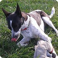 Adopt A Pet :: Ellie - Elyria, OH