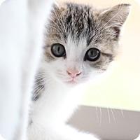 Adopt A Pet :: Camo - Lovingston, VA