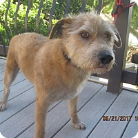 Adopt A Pet :: LOUIS - La Mesa, CA