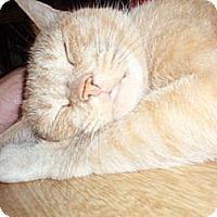 Adopt A Pet :: Fawna - East Meadow, NY