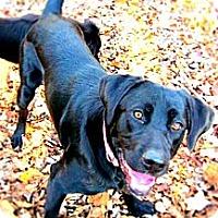 Adopt A Pet :: Smoke - Hastings, NY