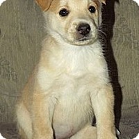 Adopt A Pet :: Blondie - Phoenix, AZ