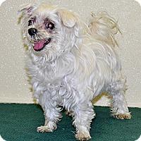 Adopt A Pet :: Mabel - Port Washington, NY