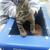 Adopt A Pet :: Finn - Ft. Lauderdale, FL