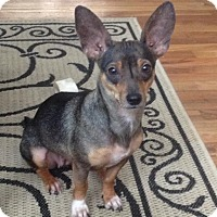 Adopt A Pet :: Chloe - Wappingers, NY