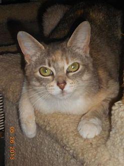 Calico Cat for adoption in Loganville, Georgia - Valley