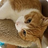 Adopt A Pet :: Serenity - Bensalem, PA