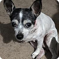 Adopt A Pet :: Josie - Salem, OR