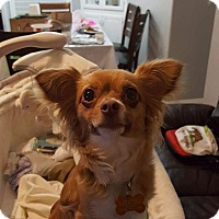 Adopt A Pet :: Lucy - La Verne, CA