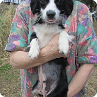 Adopt A Pet :: DOLLY - Lincolndale, NY